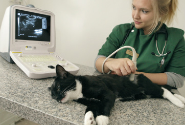 Picture of vet scanning a sedated cat