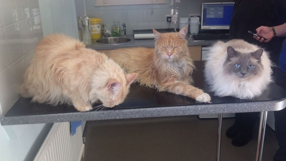 Picture of Dave, Charlie adn Poppy relaxed on the examination table